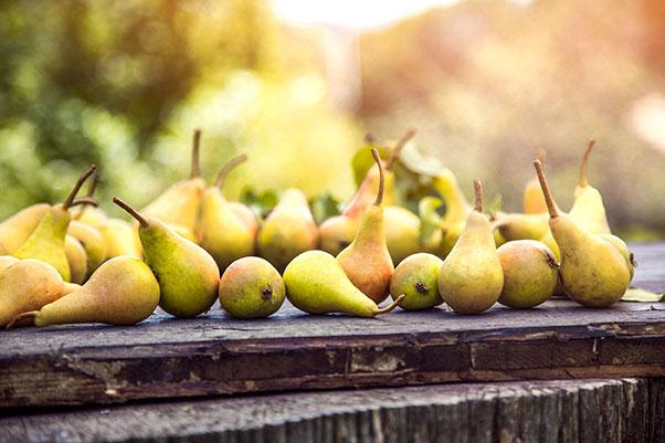 Pear midge control